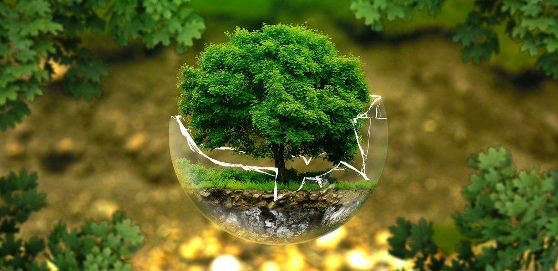 Avertismentul a peste 11.000 de cercetători: Planeta se confruntă cu o urgență climatică