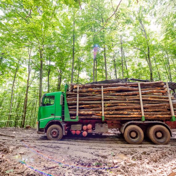 WWF România solicită preşedintelui Iohannis să nu promulge legea Codului Silvic