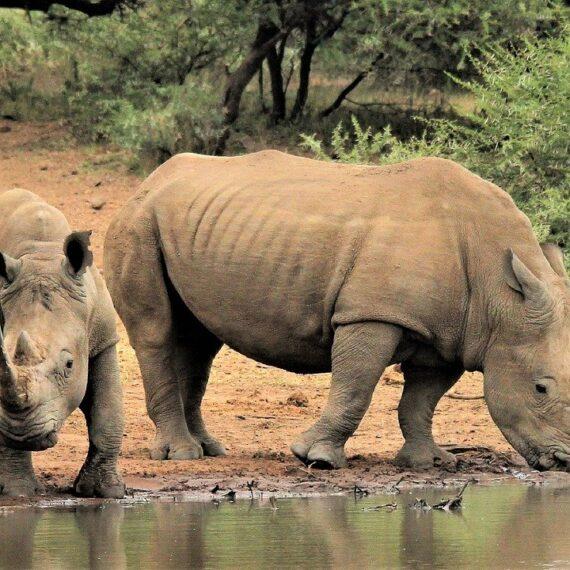 Populaţiile de animale sălbatice au scăzut cu aproape 70% în 50 de ani din cauza activității umane