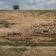 Greenpeace: Dispariţia pădurilor ameninţă siguranţa naţională. 11 milioane de români, în pericol