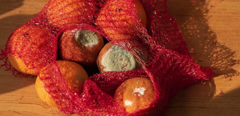 Studiu: Peste 80% dintre români aruncă mâncare. Fructele, legumele şi pâinea, alimentele risipite în cea mai mare proporţie