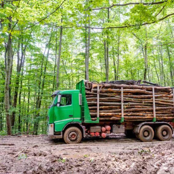 Tăierile ilegale | WWF lansează primul instrument pentru prioritizarea controalelor la ieșirea din pădure