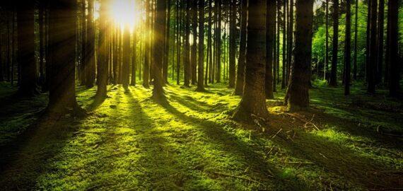 Raport: Aproximativ 30% dintre speciile de arbori din întreaga lume sunt în pericol de dispariţie